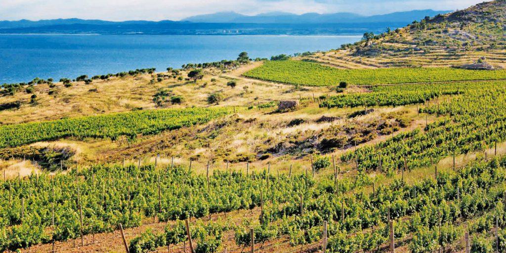 torreoria vineyard
